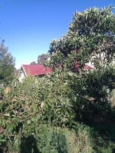 Willison's Farm and Historic Vineyard